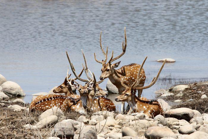 6. Le parc national Jim Corbett, Inde