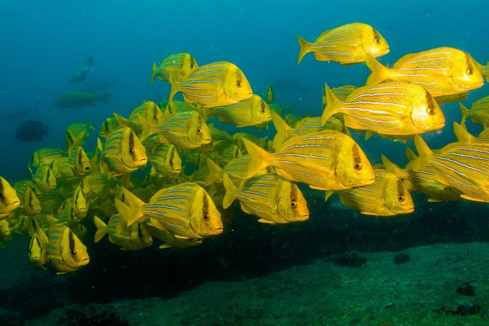 5. La mer de Cortès, Mexique