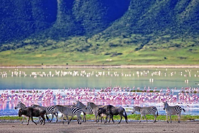 4. Le Serengeti, Tanzanie