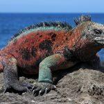 10 destinations géniales pour observer la vie sauvage