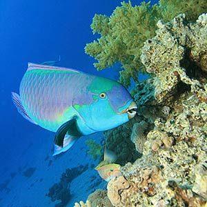2. Le poisson-perroquet dort dans un cocon fait de son propre mucus