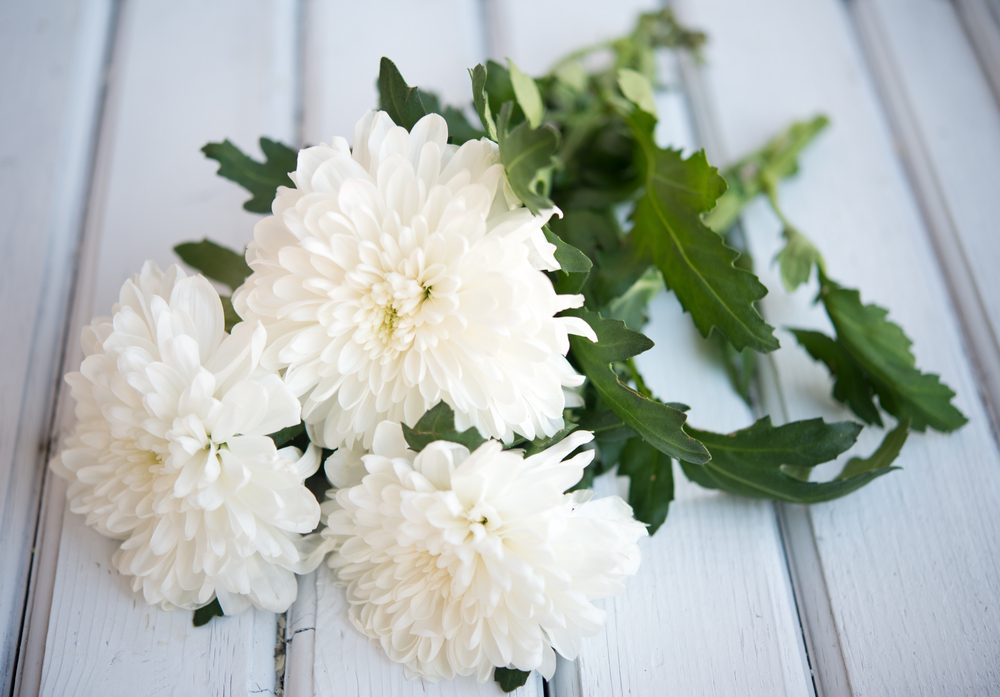 Fleur comestible : le chrysanthème