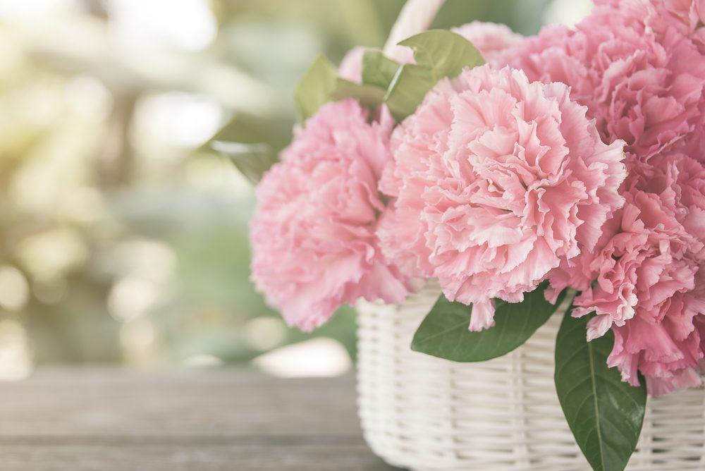 Fleur comestible : l'oeillet mignardise