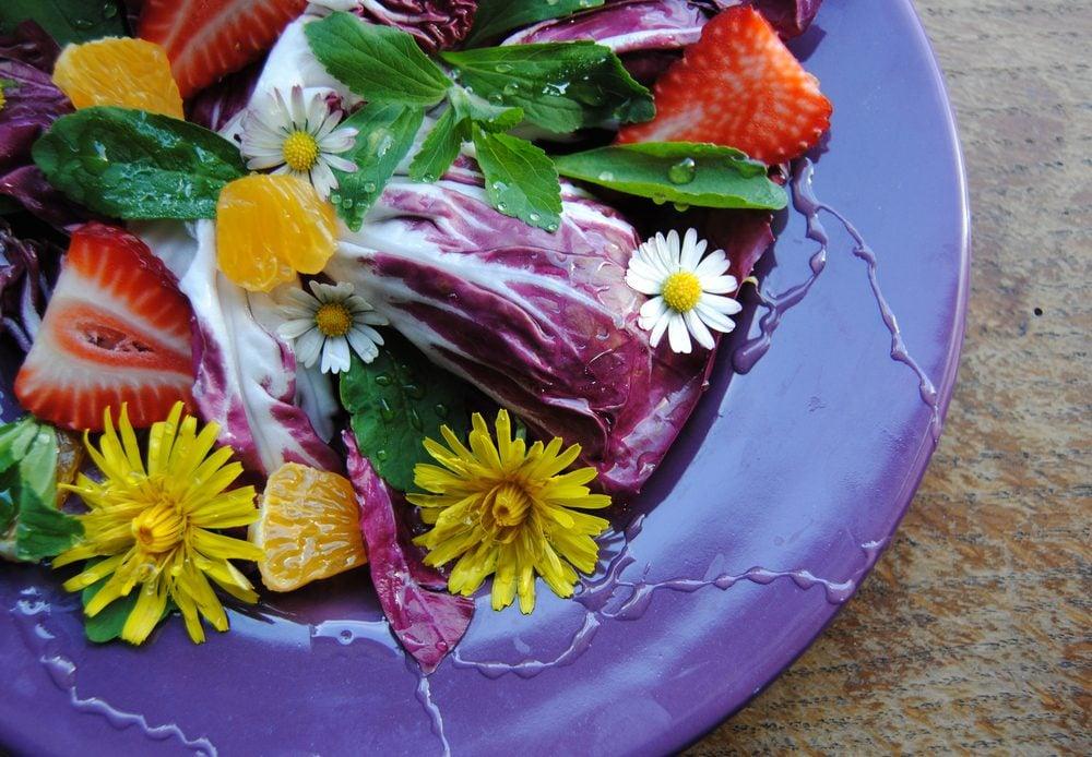 Fleur comestible : le pissenlit