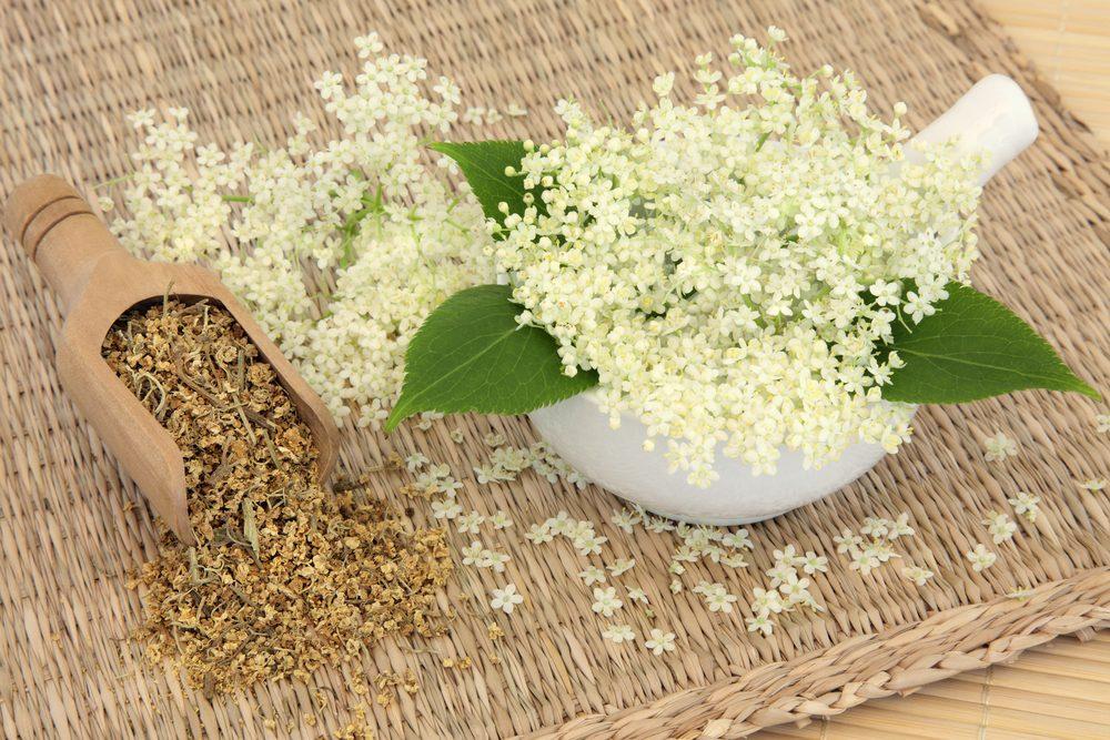 Fleur comestible : la reine des près (filipendula)