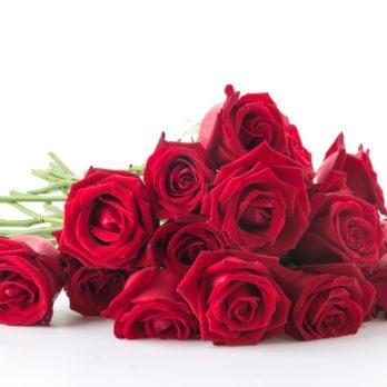Quelles fleurs choisir pour exprimer votre amour?