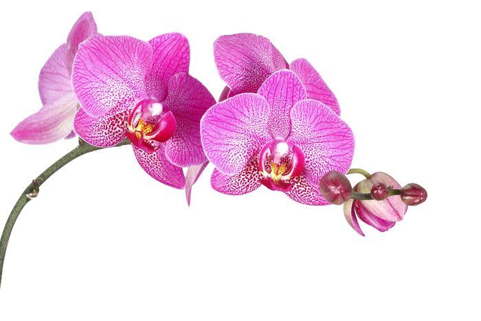 L'orchidée est la fleur pour séduire