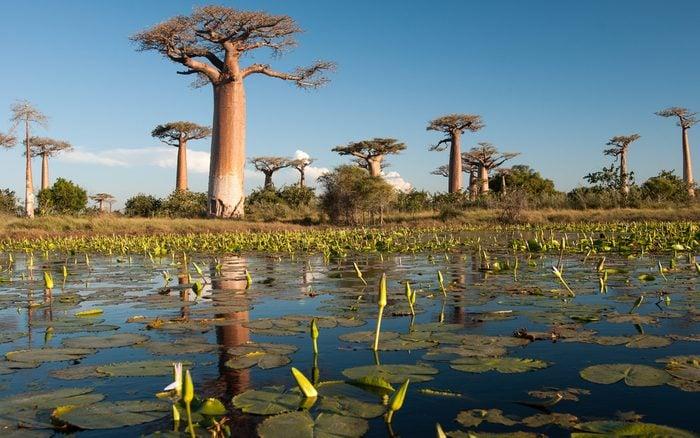 9. Les forêts tropicales humides de l'Atsinanana, Madagascar