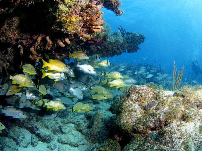 L'archipel des Keys, Floride