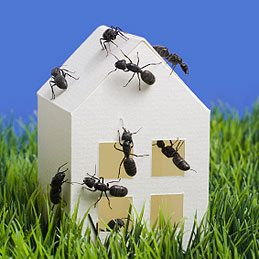 3. Détruire une fourmilière
