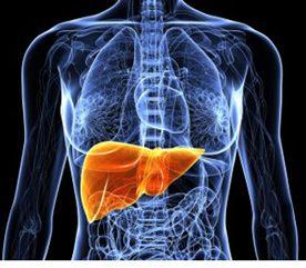 5. Vos cellules hépatiques ont environ un an (entre 300 et 500 jours).