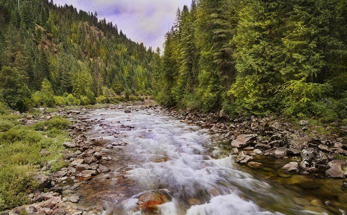 Le Canada détient 10% des forêts mondiales.