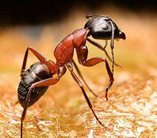 4. Lutter contre la prolifération des insectes