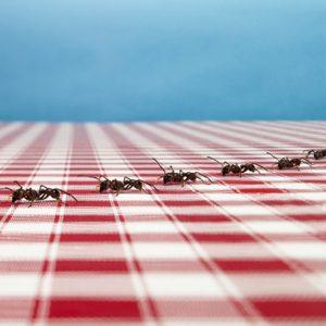 5. Se débarrasser des fourmis
