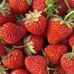 7 super aliments de juin