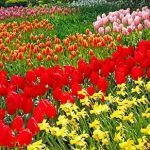 Protégez votre jardin contre les indésirables