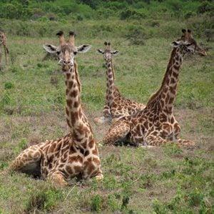 Afrique de l'Est: (Tanzanie)
