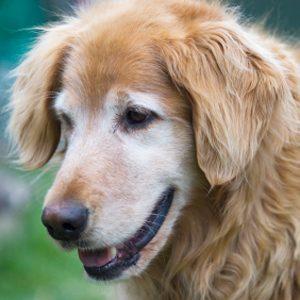 Le chien Jango