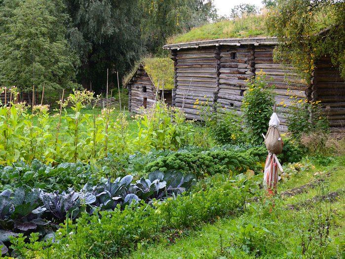 Comment faire l'aménagement de son grand jardin?