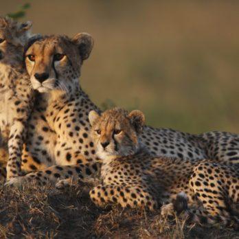 Voyage: 5 destinations pour observer le royaume animal