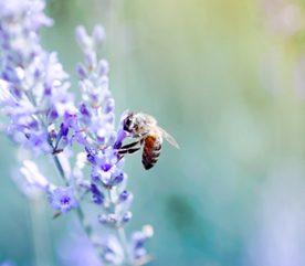 4. Observez des insectes