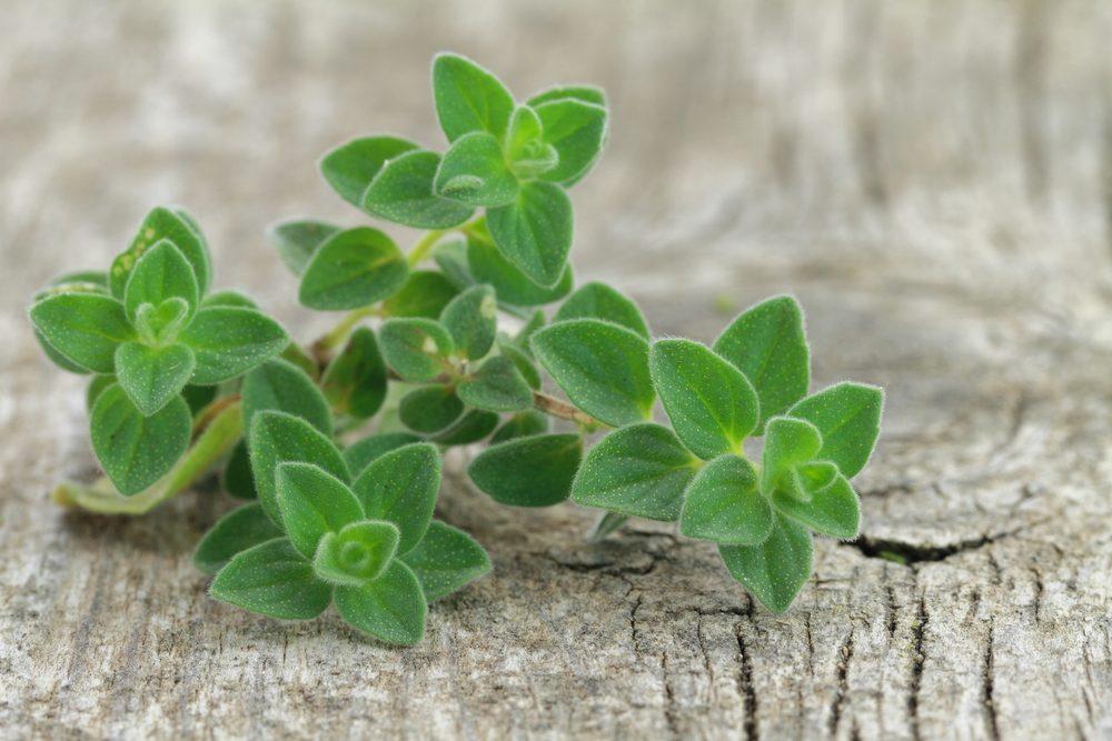 Des feuilles d'origan pour guérir une ecchymose