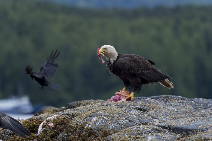 Haida Gwaii, un lieu à explorer