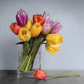 Prolonger la vie des fleurs coupées