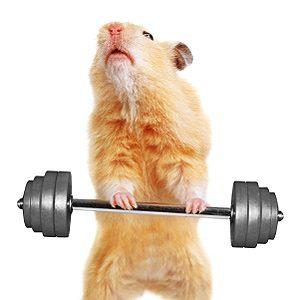6 mythes tranges sur la nutrition des animaux 1 7 - Videos droles d animaux ...