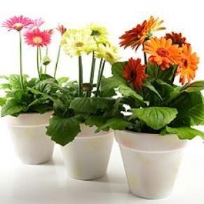 Petit guide des plantes exotiques d'intérieur