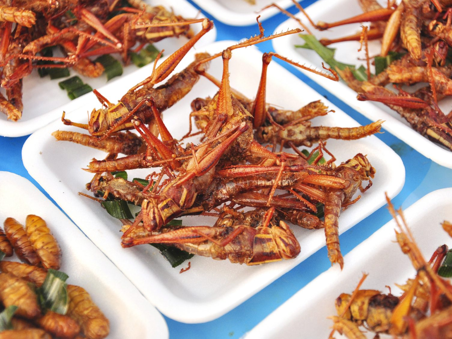 Les insectes : superaliments du futur?