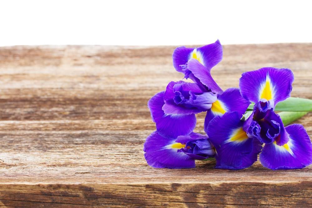 L'iris signifie la confiance et l'amour