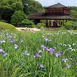 4. Le jardin de Koishikawa Koraku-en
