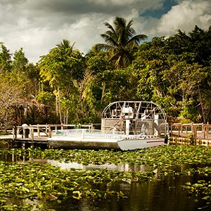 7. Le parc national des Everglades