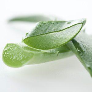 2. Mettez du gel d'Aloe vera tous les jours