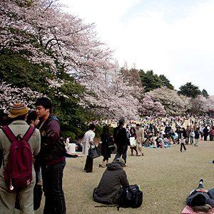 7. Le parc d'Ueno