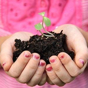 Utiliser des boîtes à soleil pour vos semis de légumes