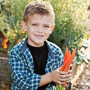 Gardez les légumes racines droits à l'aide d'un tuyau