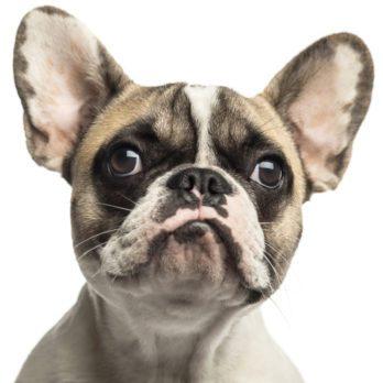 Psychologie animale: les animaux sont-ils jaloux?
