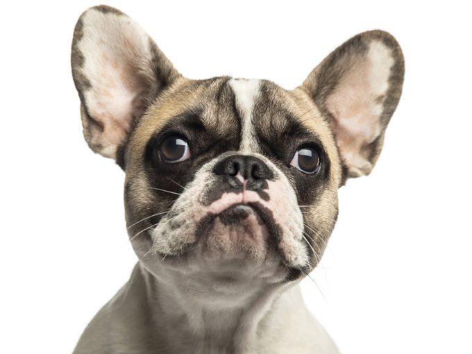 Psychologie animale : les animaux sont-ils jaloux?