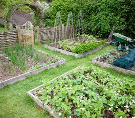 Plantes compagnes for Entretien poivron jardin