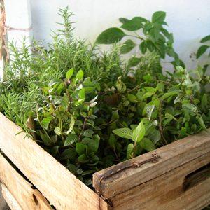 un jardin de fines herbes indispensables. Black Bedroom Furniture Sets. Home Design Ideas