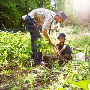 5. Désherbez un coin de jardin