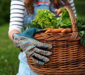 7. Les produits bio sont meilleurs pour la santé