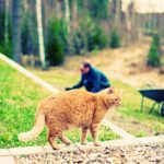 5 trucs de pros pour nettoyer la cour et le jardin