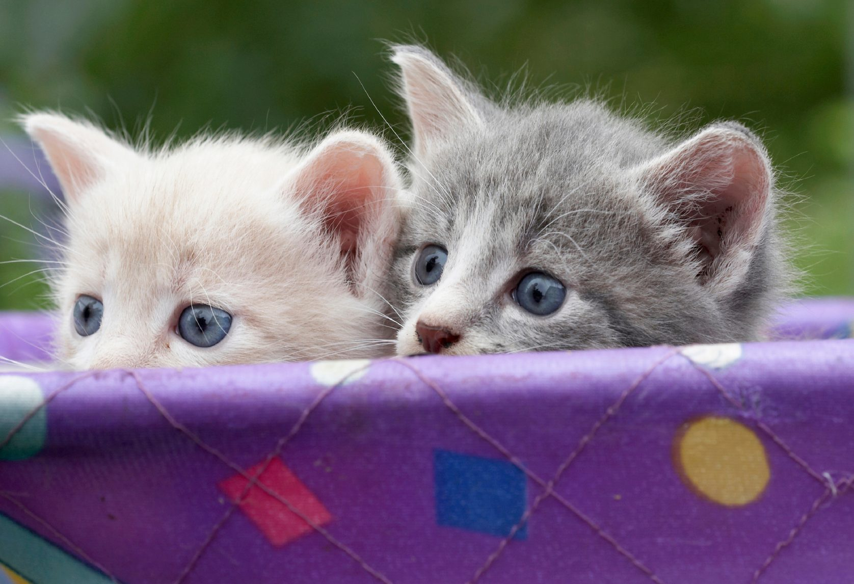 3. Les chats préfèrent leur langage infantile