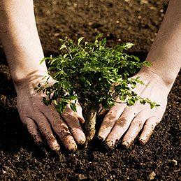 Plantations encadrées