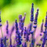 Santé: 5 remèdes étonnants grâce aux plantes