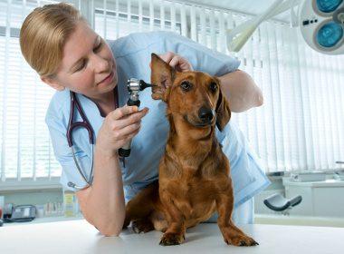 5. Garder le même vétérinaire