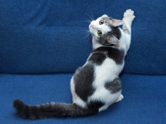 9. Les chats ont besoin de gratter